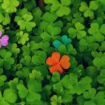 On Shamrocks and Finding Your Brand's Voice