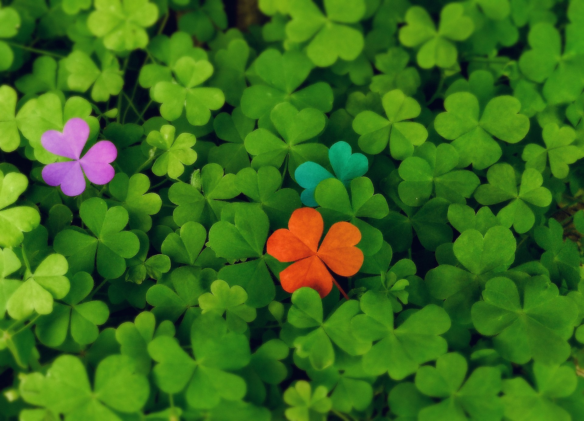 Read more on On Shamrocks and Finding Your Brand's Voice