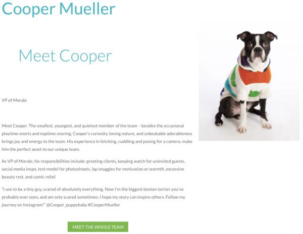 Hiilite Marketing Website Design Kelowna Visual Composer Cooper In Progress