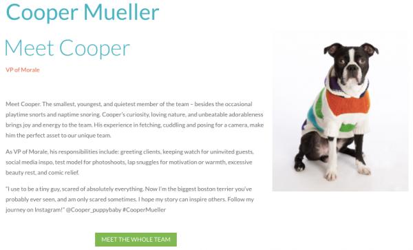 Hiilite Marketing Website Design Kelowna Visual Composer Cooper Page Finished