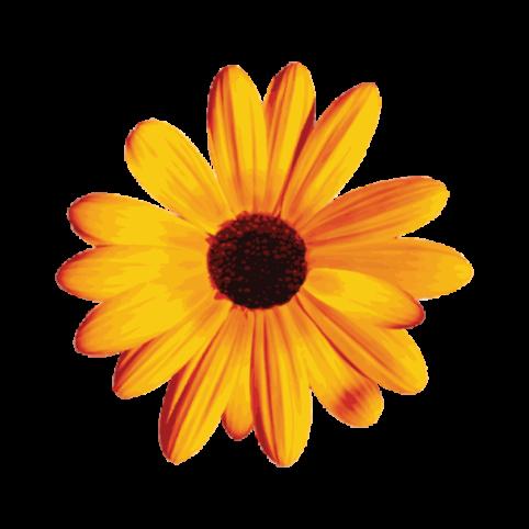 hiilite-cove-resort-hospitality-marketing-okanagan-logo-flower