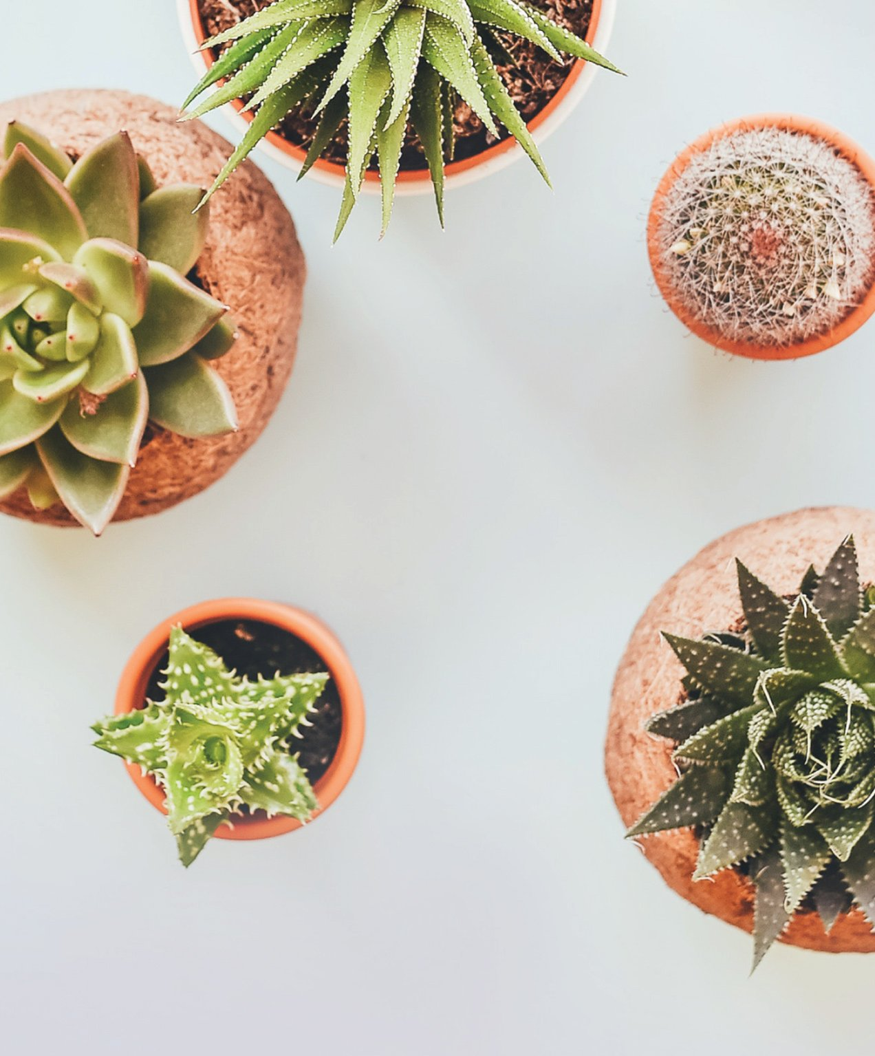 retail marketing succulents