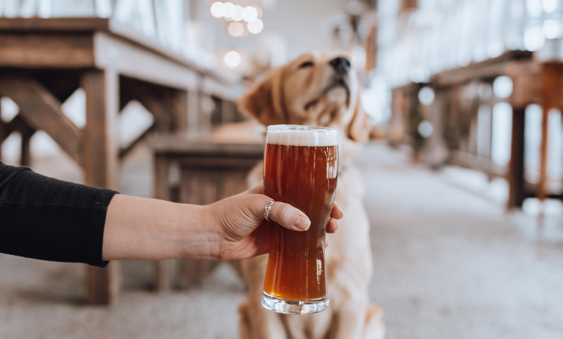 kelowna brewery marketing beer and dog